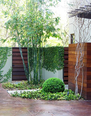 bamboo-boxwood-david-wilson-garden-design_4537